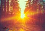 felkelő napfénye áttör a fák között