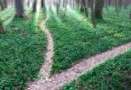 erdei útelágazás